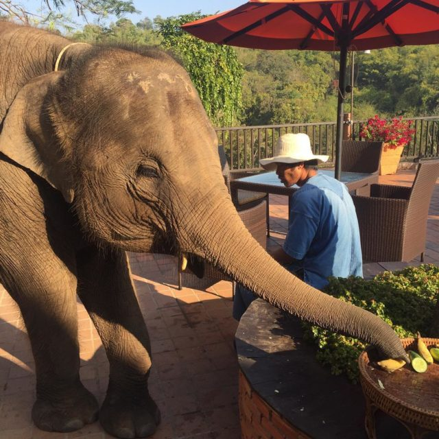 Breakfast at anantarahotels anantaragoldentriangle goldentriangle chiangrai thailand elephant fruitbowl sneakyhellip