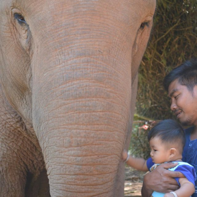 Bonding with a new generation anantarahotels anantaragoldentriangle elephant mahout lovehellip